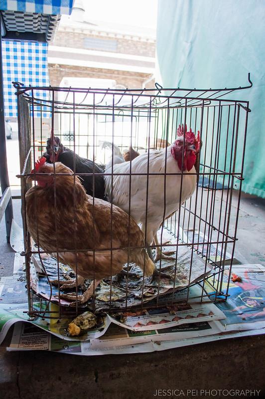 chickens farmer's market