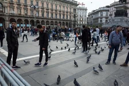 Milan - Crazy Birds