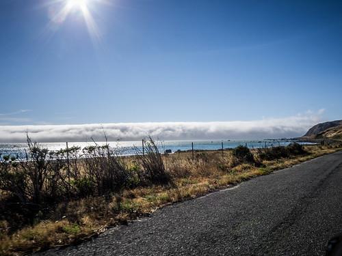 Coastal Redwoods and Fog-101