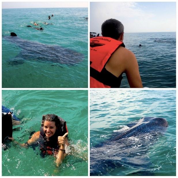 Tiburón ballena en Mexico