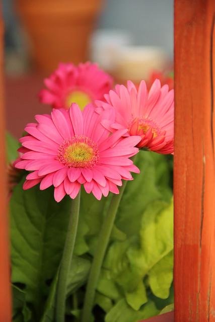 20140623_Flowers_007