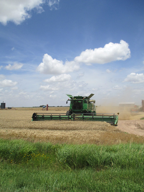 Harvesting in Iuka