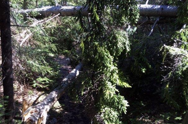 Mahoosuc Trail Blowdowns