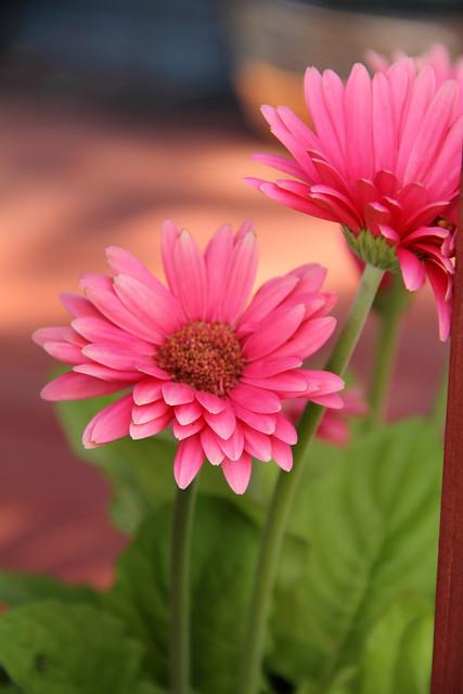 20140704_Flowers_021