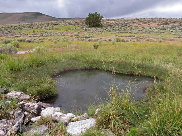 Natural hot spring at Hart Mountain National Antelope