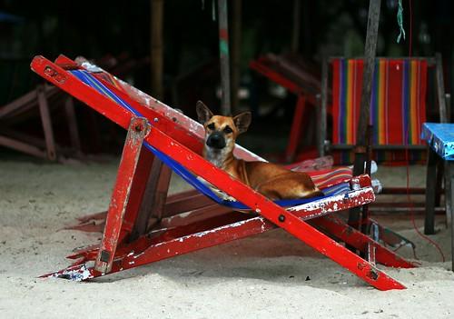 Dog on a deckchair