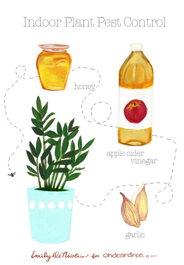 ohdeardrea natural indoor pest control for indoor plants
