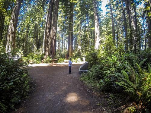 Redwoods and Elk-038