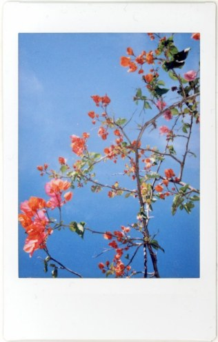 Bougainvillea #2