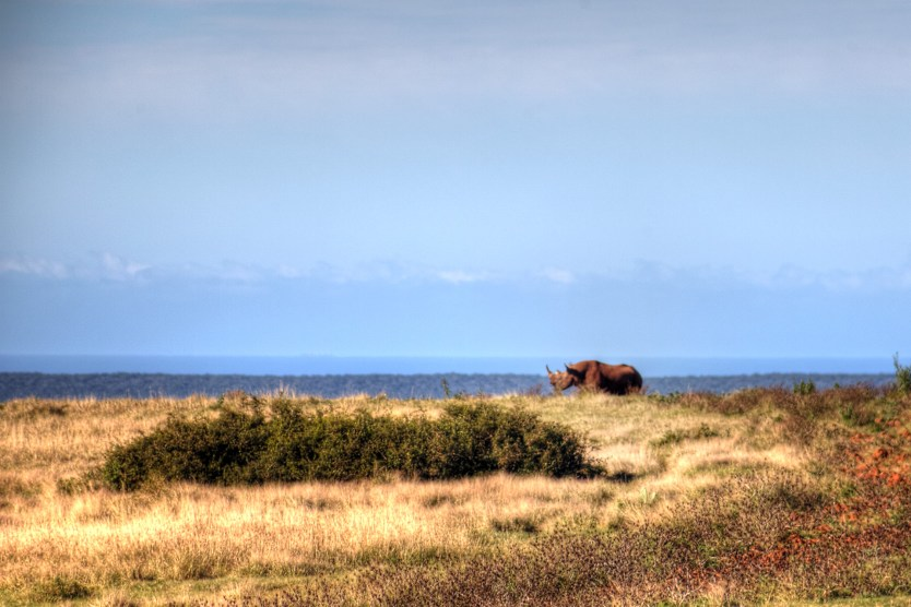 As close as we were able to come to a black rhino.