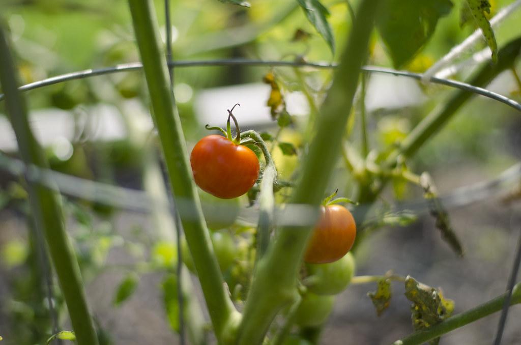 garden // weeks eight, nine, and ten 1