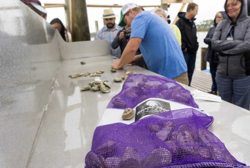 Lane Zirlott of Murder Point Oyster Co., Schucks Oysters in Bayou la Batre, Ala., during - World Food Championships Blogger Summit, Orange Beach, Ala., Nov. 7 - 9, 2016.