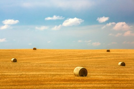 Lonesome Fields