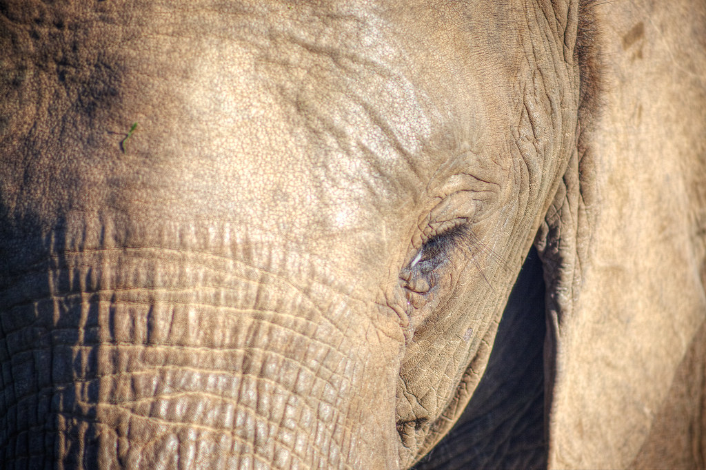 LOOKING INTO THE EYE OF AN ELEPHANT.