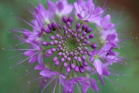 Flower - explore 2014-07-25