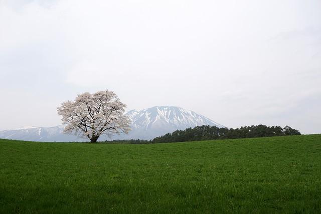 12. 日本東北櫻花之旅_Day3_小巖井農場 @ 阿狗的玩樂網誌 :: 痞客邦