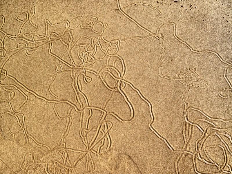 Sea snail Trails.