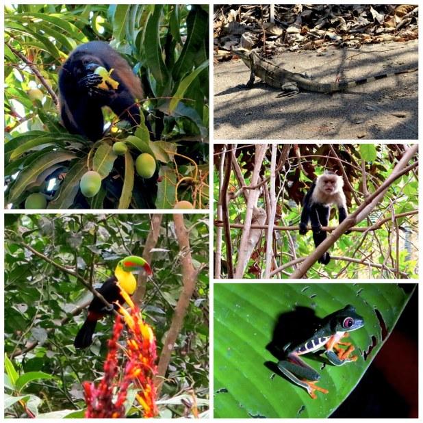 Iguanas y tucanes en Costa Rica