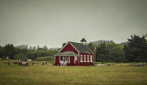 Redwoods and Elk-057