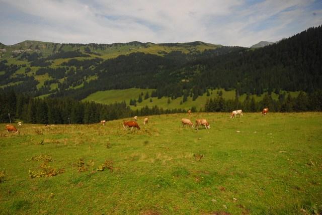Enjoying a Swiss summer