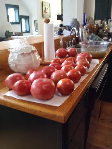 First Tomatoes From The Garden