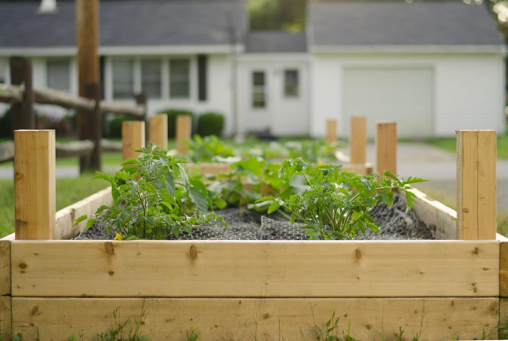 garden 2014 // week two 4