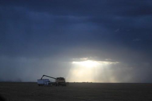 We harvest till we can no longer!