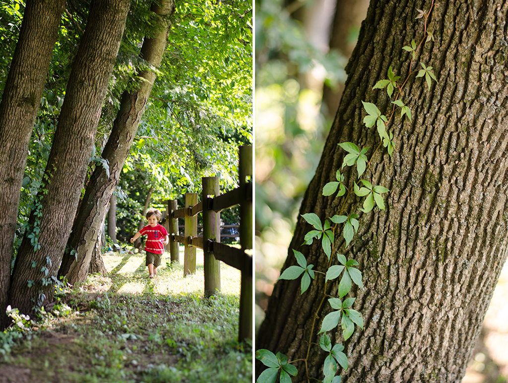 virginia creeper collage
