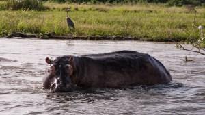 Boat Safari 25