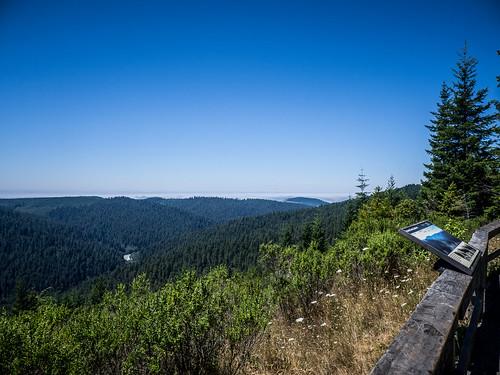 Redwoods and Elk-095