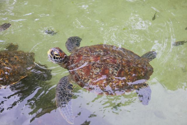 Mnarani Natural Aquarium