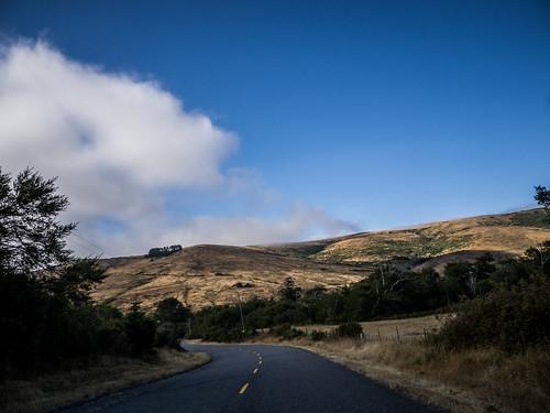 Coastal Redwoods and Fog-109