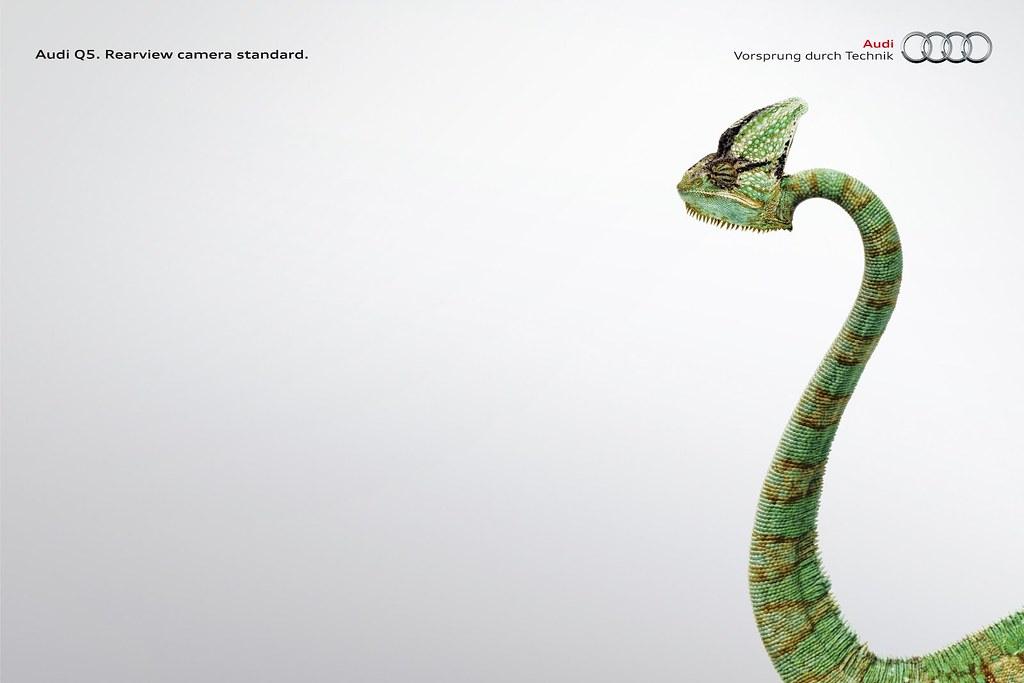 Audi Q5 - Lizard