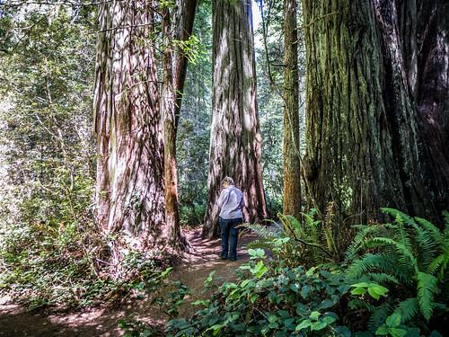 Redwoods and Elk-084