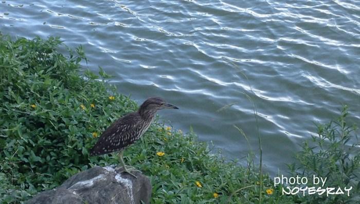 05 碧湖公園