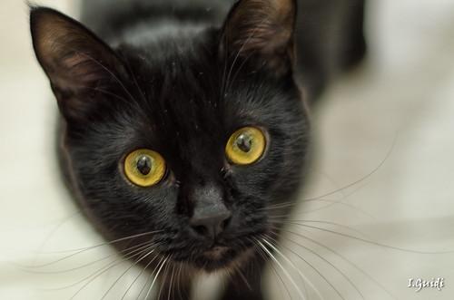 Cat Kichute