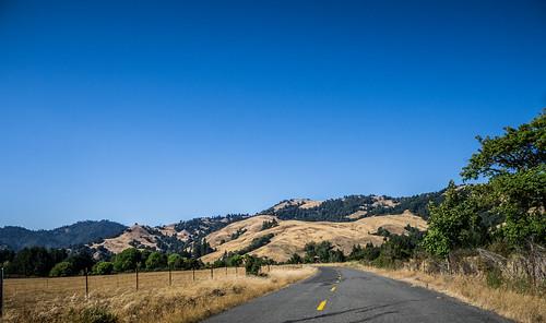 Coastal Redwoods and Fog-097