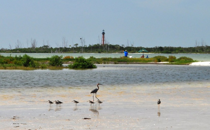 Seeing Birds While Enjoying Beach Time with Spongeorama's Cruise Lines, Tarpon Springs, Fla., Aug. 30, 2104