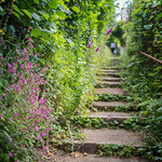 Wild flowers growing over steps