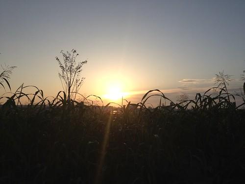flickr: 早朝伊丹市下河原付近