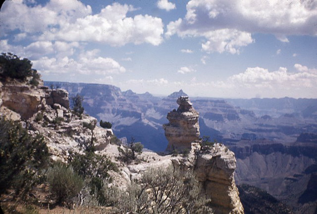 tbt Duck on the Rock  Grand Canyon National Park