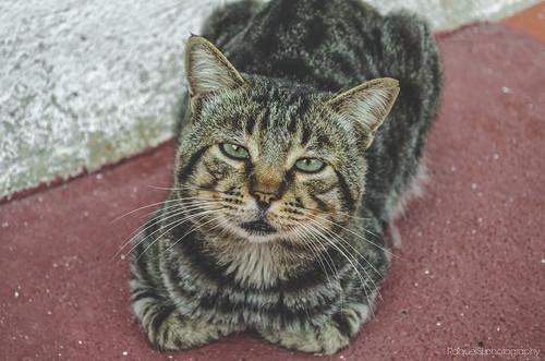 Old Cat #Cat #Gato #Felino