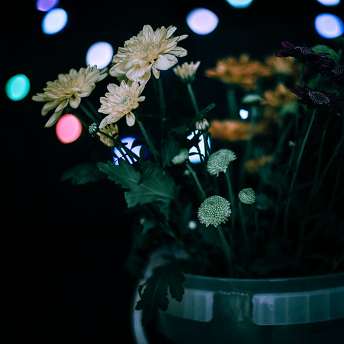 A Bokeh of a Bouquet in a Bucket