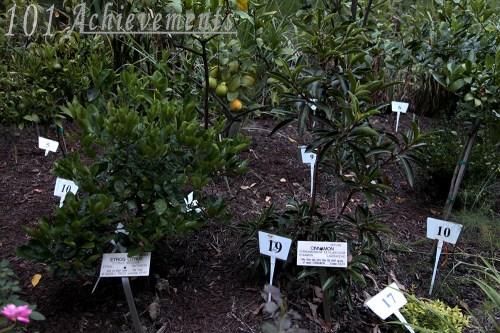 Biblical Botanical Garden