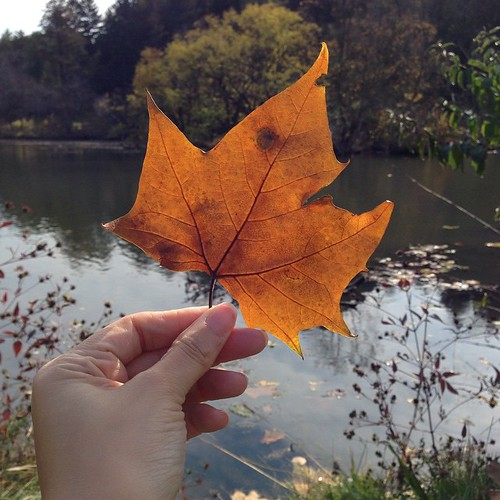 It's 75 on October 27. The Sun is out and I am surrounded by trees. It is a good day. ???? #tree #autumn #sun #leaf #lake