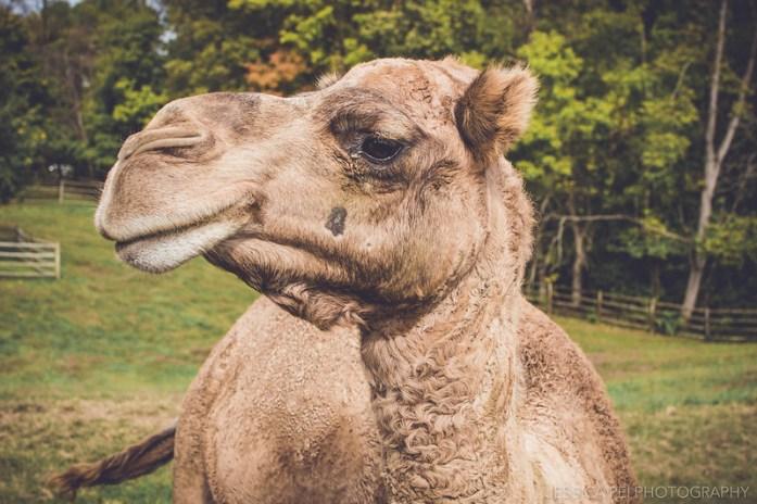 camel grant's farm pet feed