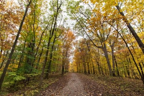 Forest Glen