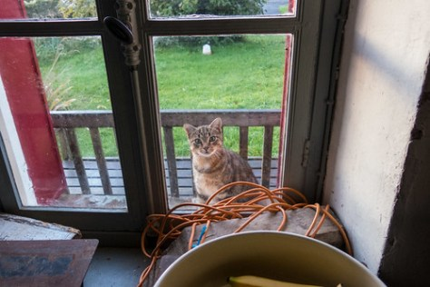 Cat outside de window