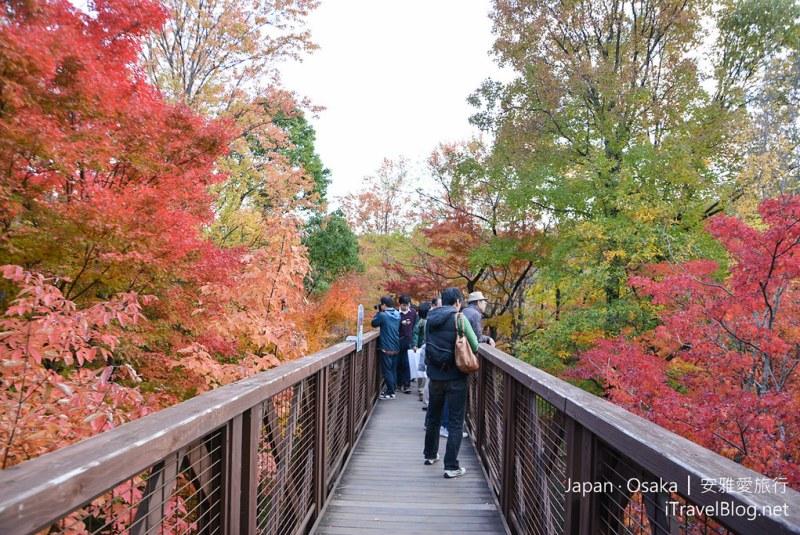 大阪赏枫 万博纪念公园 红叶庭园 19