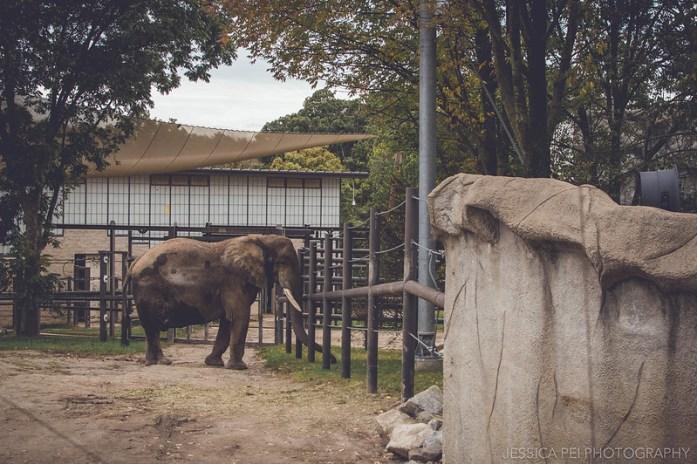 elephant trunk reach animal grant's farm